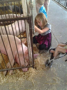Skylar, 6, pets the pigs at the fair.