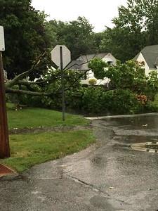 A tree is down on Penfield Avenue near West Recreation Field