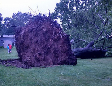 A tree was uprooted from an Elyria Township backyard on June 18.