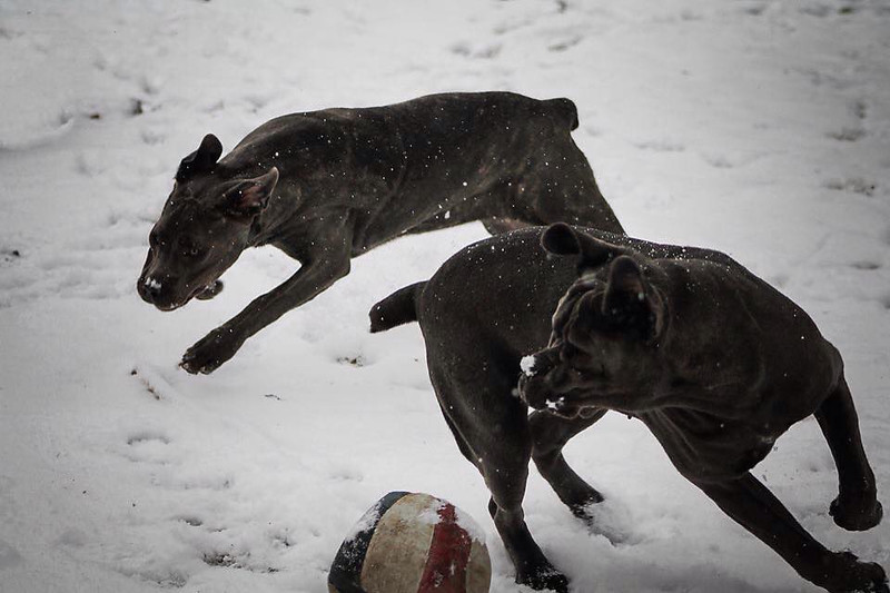 Sadie and Murmur had a blast playing in the snow on Tuesday.