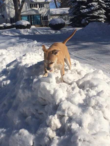 Emma loves playing in the giant snow piles after the driveway is shoveled.