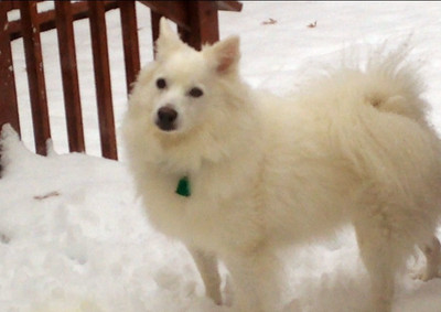 Bear the dog almost blends into all the snow.