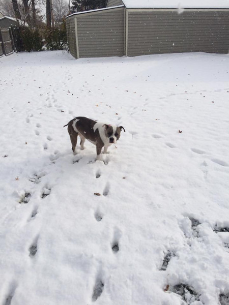Lola seems a little apprehensive about the snow in Lorain.