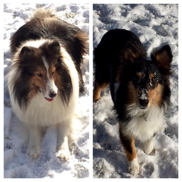 Tobi and Stella from Avon Lake had fun playing in the snow on Tuesday.
