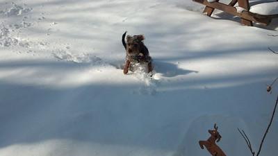 Rebecca Montgomery-Deaton's dog, Dexter, loves the snow.
