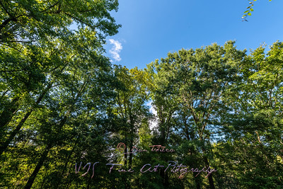 Trees and Blue Sky on the Nature Trail