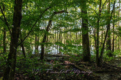 Swamp and Wilderness on the Nature Trail