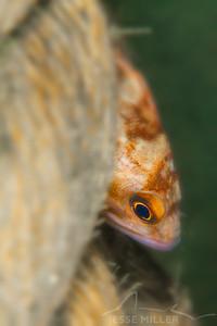 Rockfish - Redondo in Des Moines, Washington