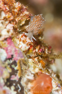 Nudibranch - Keystone Jetty on Whidbey Island, Washington