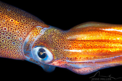 Opalescent Squid - Redondo in Des Moines, Washington
