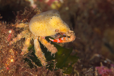 Crab - Sunrise Beach Park in Gig Harbor, Washington