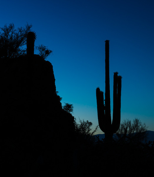 Dusk in the Desert