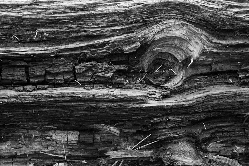 Woodlands Eye