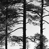 Arborial Lanes