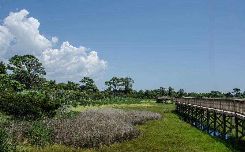A Marshy Walk