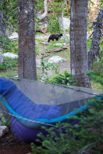 Hammock Sleepers and Black Bear