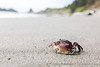 Small Crab in a Big World