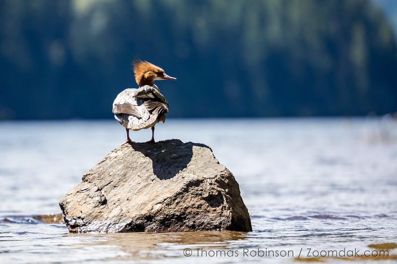 Duck Look
