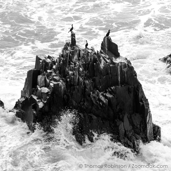 Cormorant Rock Perch