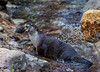 River Otter Lunch
