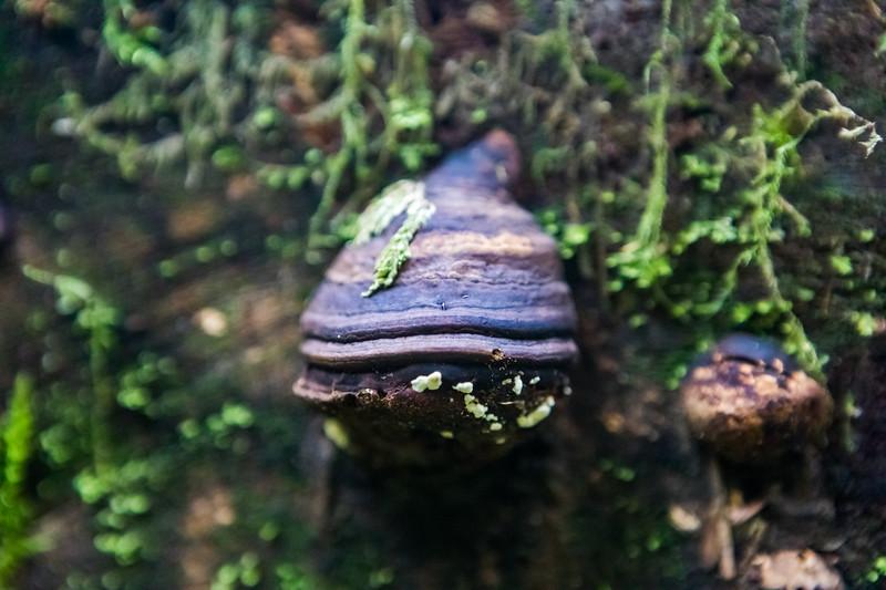 Fungi Shell