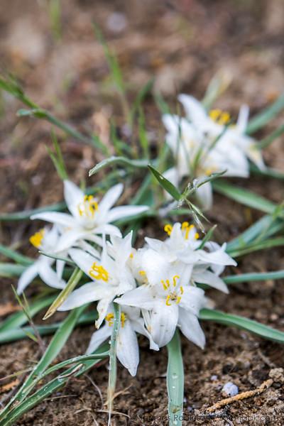 White Wildflower Blossom