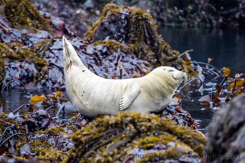 Happy Seal