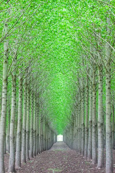 Oregon Tree Farm Vertical