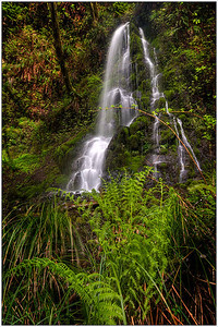 ferns, HDR, Oregon, waterfalls, fine art