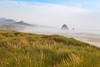 Dune Scene in Cannon Beach