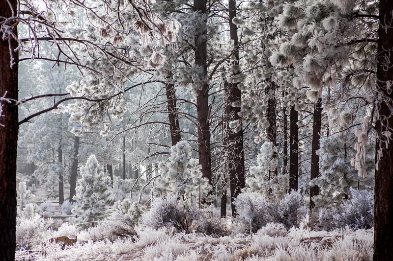 Frosty Morning, Central Oregon