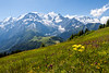 Wildflowers and Mont Blanc Massif
