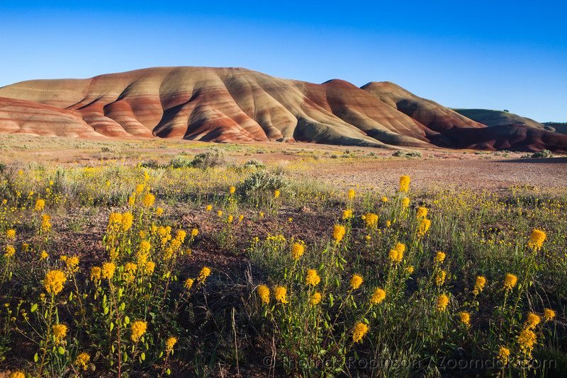 Wildflowers at Painted Hills, Oregon