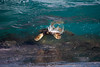 Turtle in a Wave