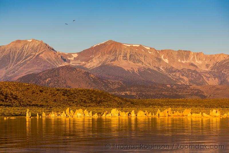 Osprey Flight Over Mono Lake