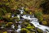 Oregon Forest Creek Falls