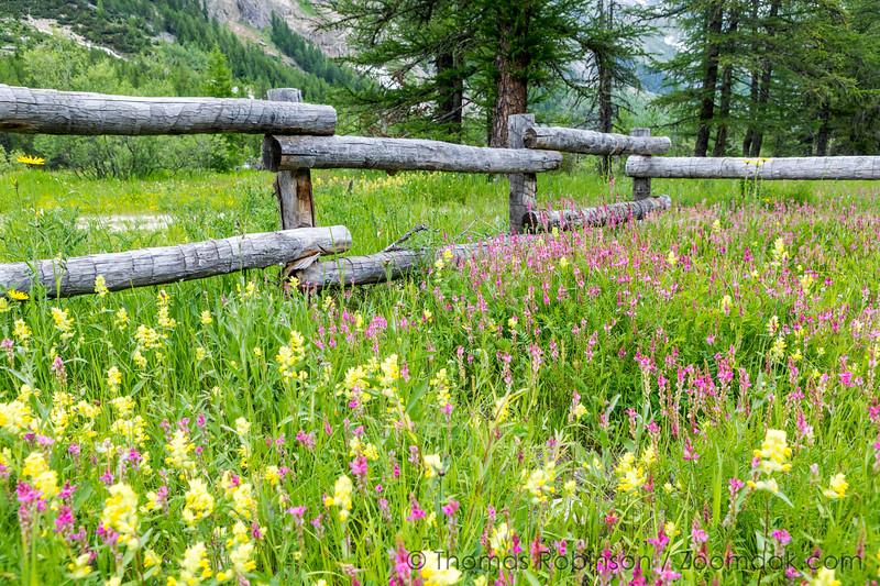 Val Veny Wildflower Meadow