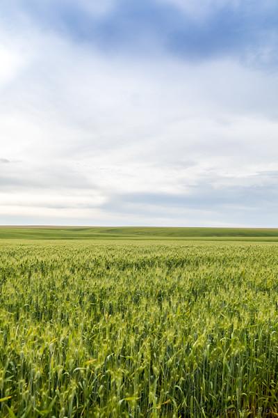 Wheat Field Horizon