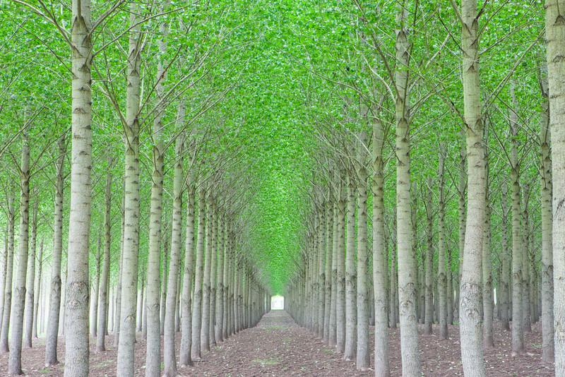 Oregon Tree Farm Horizontal
