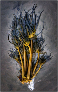 Ocean Flotsam, Fine art, Sea weed, Oregon