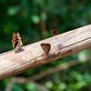 Butterflies in Iguazu.