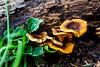 Group of Fungi