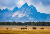 Wild Horses and Grand Tetons, Horizontal