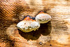 Beaded Fungi