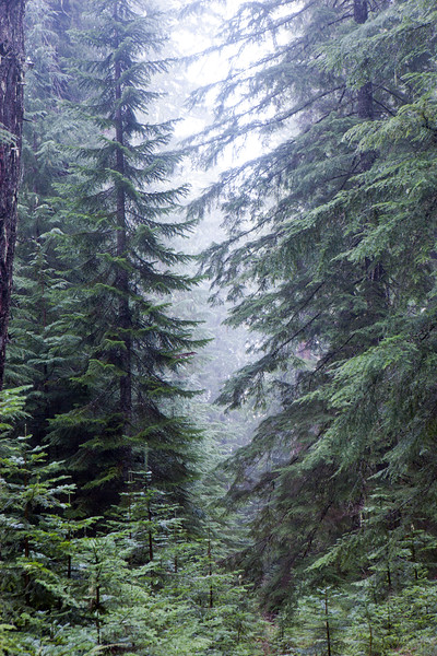 Hackleman Old Growth Trees