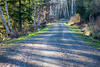 Road Thru the Trees