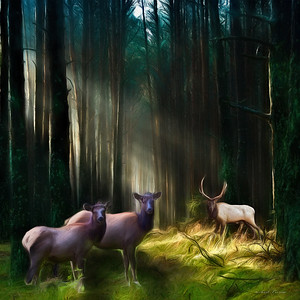 Magic Elk