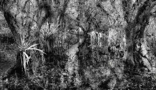 Cypress Swamp
