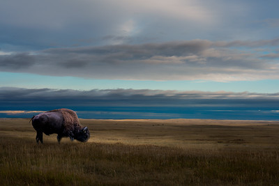 Harmony and Peace on the Prairie
