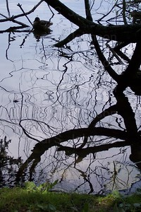 Lake_Reflection_00